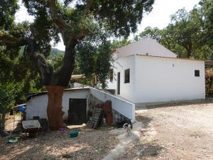 Monchique traditional farm for sale