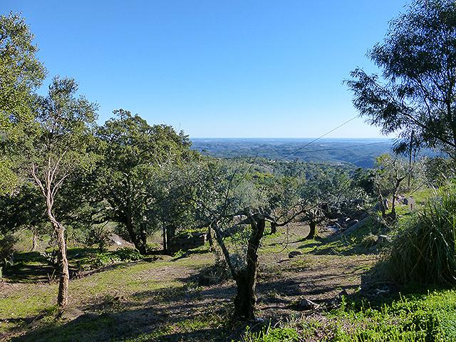 for sale terrain Monchique