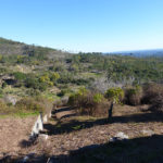 Land near Monchique for sale