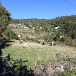 Monchique Portugal plot for sale