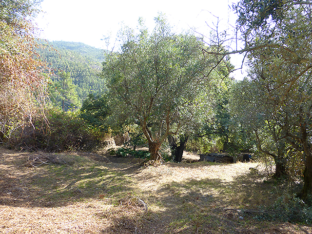Monchique terrain with ruin for sale