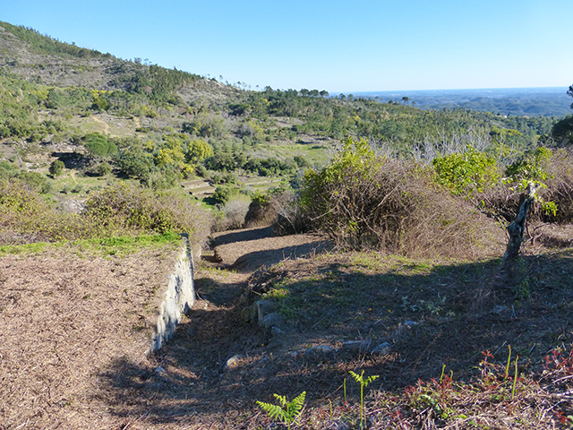 Terrain for sale with ruin Monchique Portugal