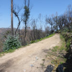 Monchique terrain for sale