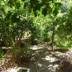 House with Garden for sale Monchique