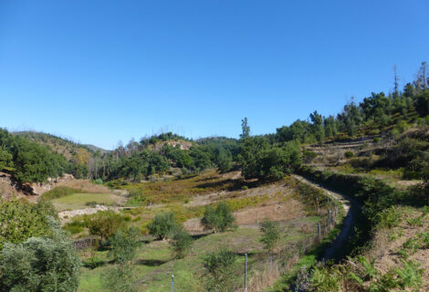 Land with ruin in quiet valley with stream near Monchique for sale